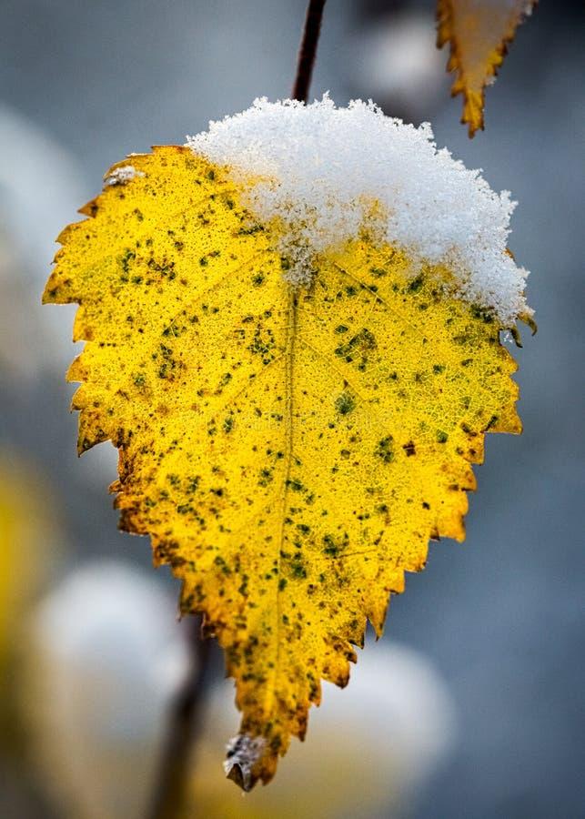 冬天叶子 库存图片