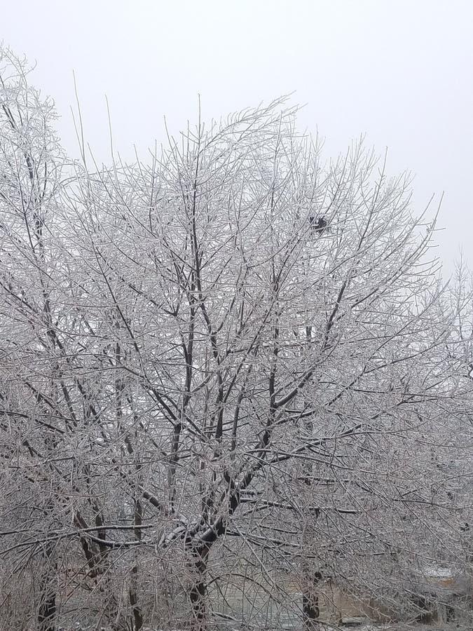 冬天后院的冰树 免版税库存图片