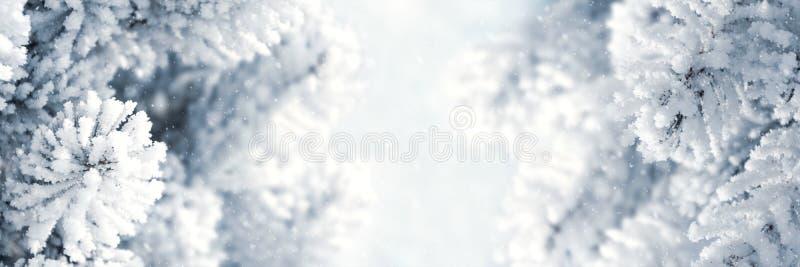 ??3:1 冬天圣诞节风景背景 与用雪报道的云杉的分支的雪风景 通过天空和阳光 免版税库存图片