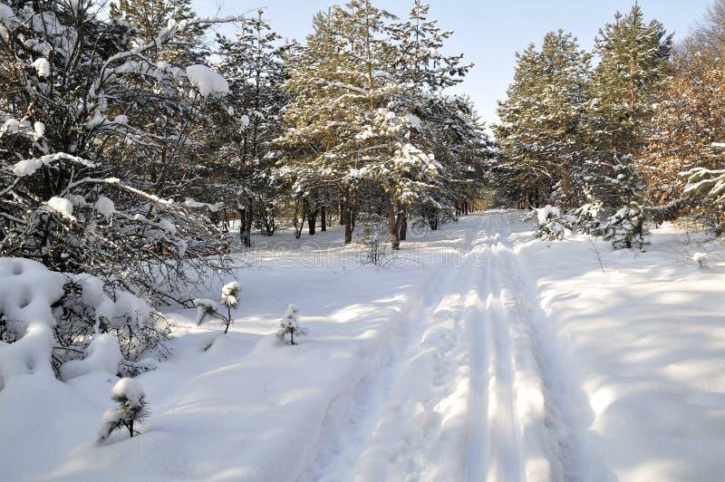 冬天在乌克兰北部 库存照片