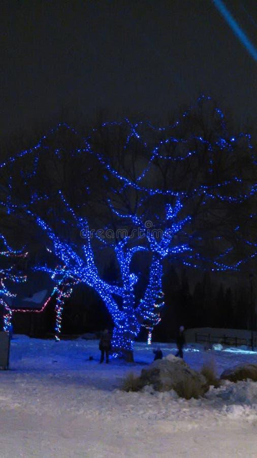 冬天在云杉的树丛里 免版税库存照片