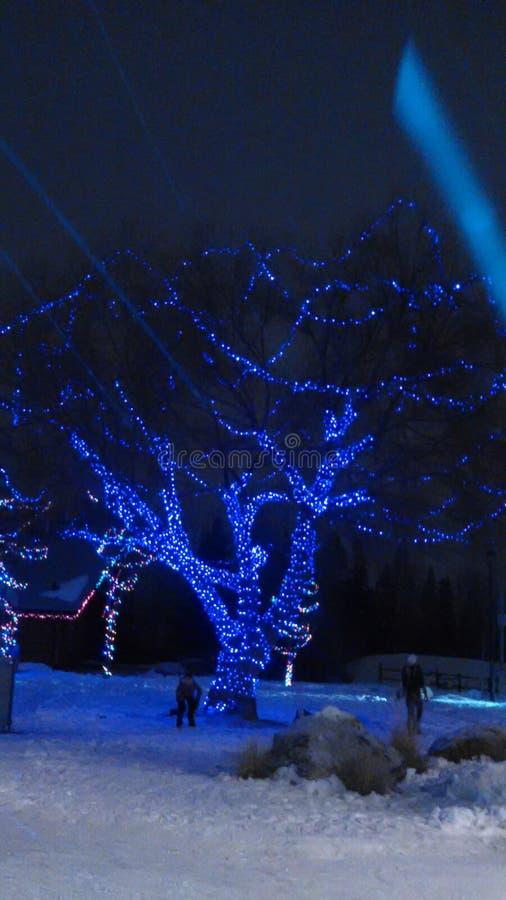 冬天在云杉的树丛里 库存图片