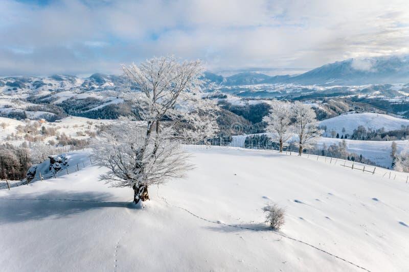 冬天在从农民村庄Sirnea的特兰西瓦尼亚,罗马尼亚传统风景在布兰城堡和锡纳亚附近 免版税库存图片