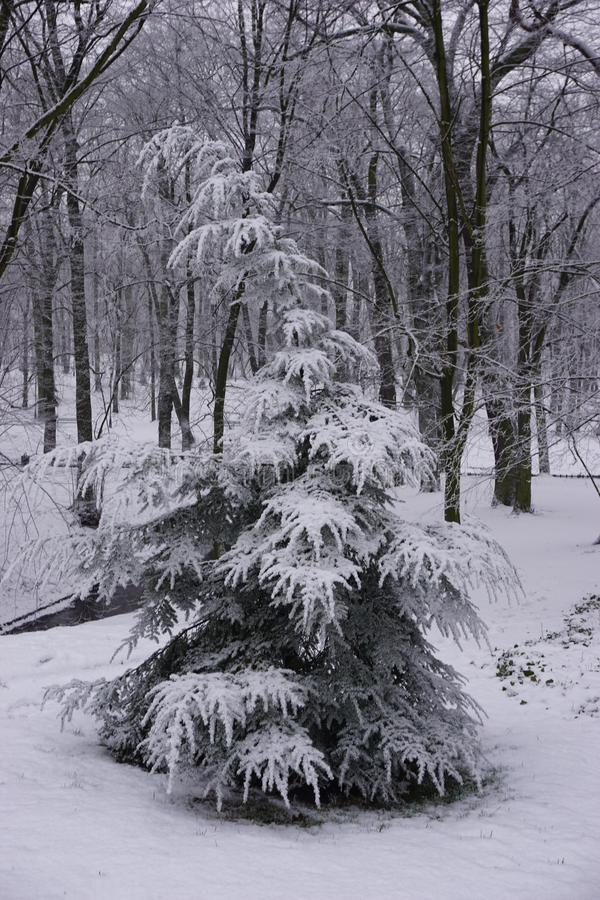 冬天在公园5 免版税库存图片