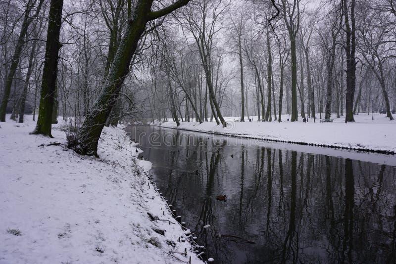 冬天在公园10 库存照片