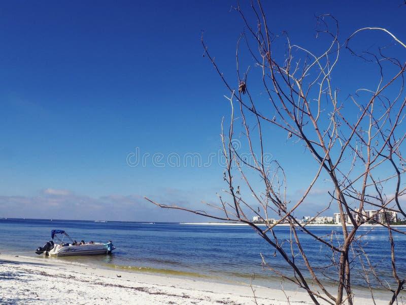 冬天在博尼塔斯普林斯,FL 免版税库存图片