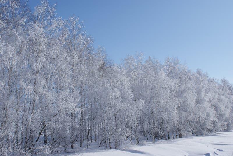 冬天在奥伦堡地区 图库摄影