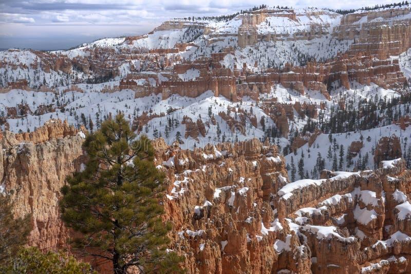冬天在布莱斯峡谷国家公园 库存照片