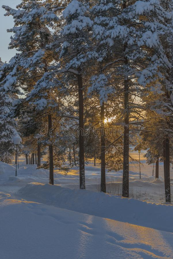 冬天在拉普兰,瑞典,北博滕 免版税库存照片