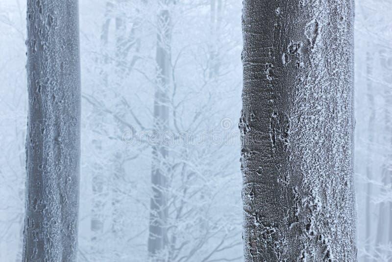 冬天在森林,与霜的树里 在捷克山毛榉树的雪细节pf森林蓝色和白色冬天风景 与霜外套的木头 库存照片