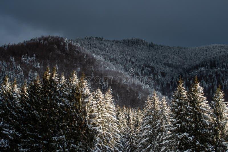 冬天在罗马尼亚,喀尔巴阡山脉在特兰西瓦尼亚 免版税库存图片