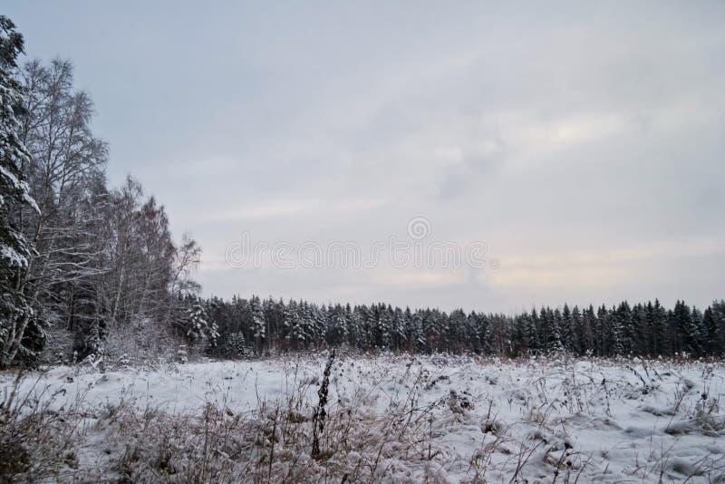 冬天在阴沉的天气的领域风景 免版税库存照片
