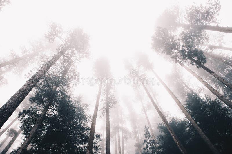 冬天在阿尔卑斯山的森林风景 免版税库存照片
