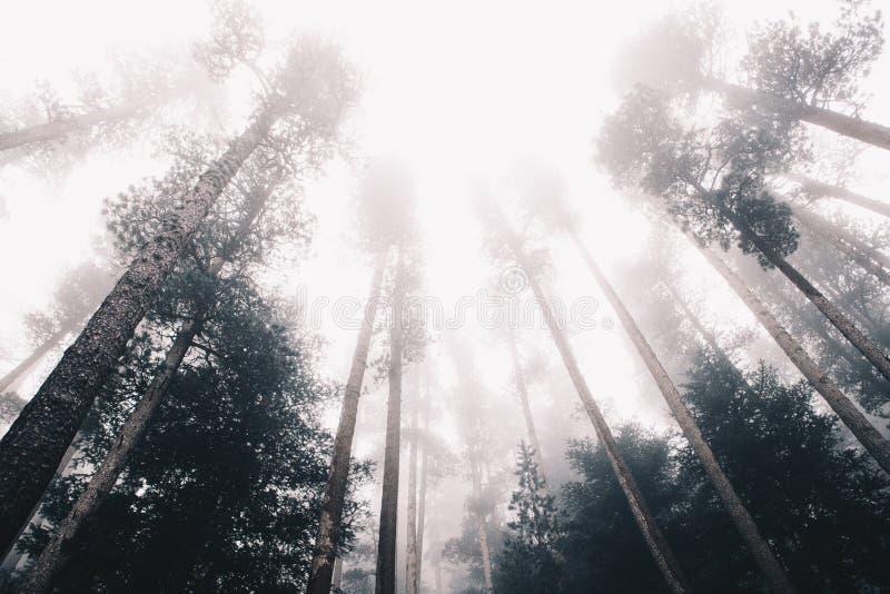 冬天在阿尔卑斯山的森林风景 免版税图库摄影
