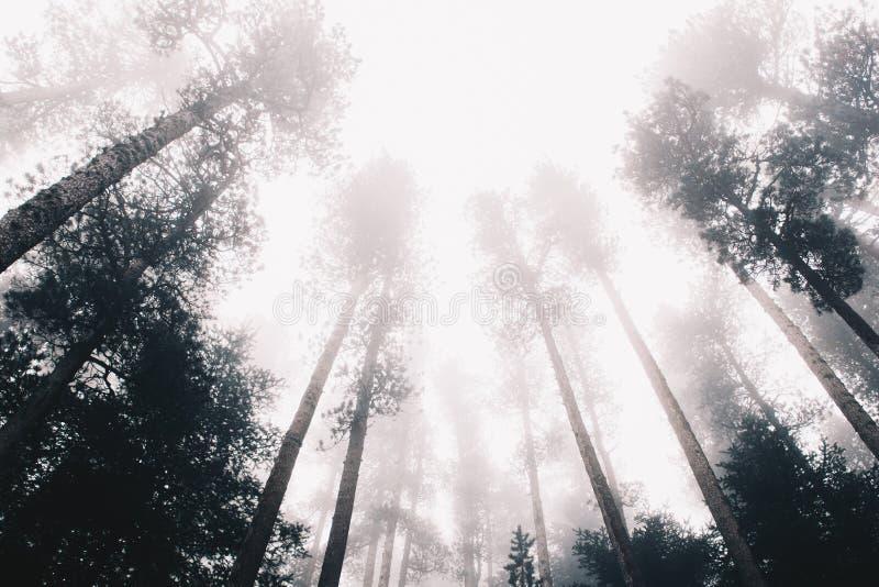 冬天在阿尔卑斯山的森林风景 图库摄影
