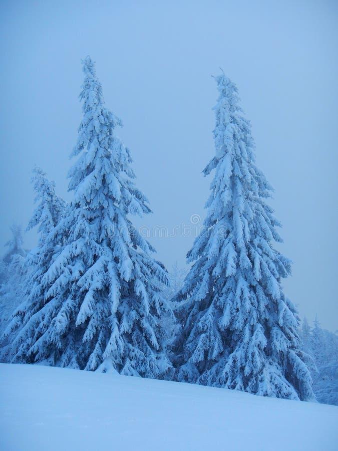 冬天在Beskydy 免版税库存图片