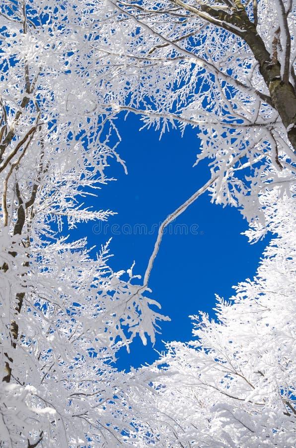 冬天在Bieszczady,波兰 免版税图库摄影