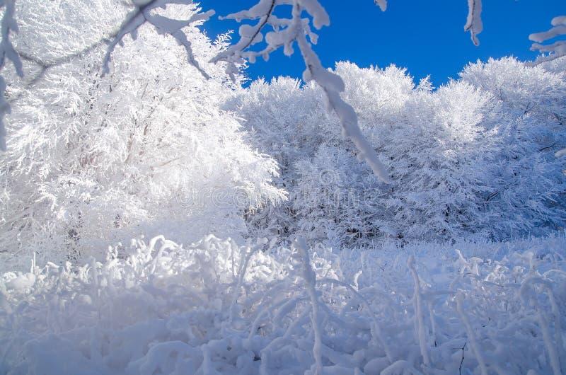 冬天在Bieszczady,波兰 库存照片