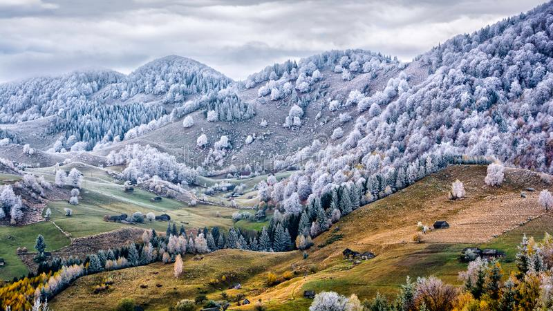冬天场面在罗马尼亚,在秋天树的白色霜 免版税库存图片
