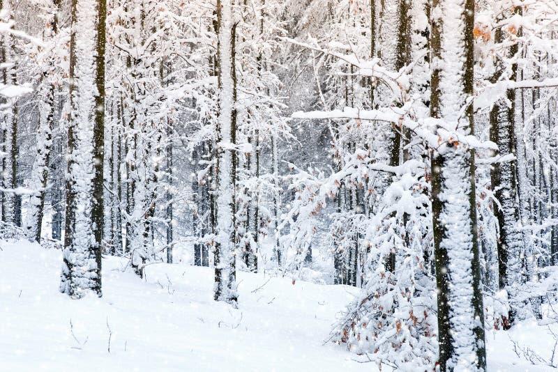 冬天场面 图库摄影