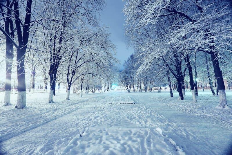 冬天城市公园 图库摄影