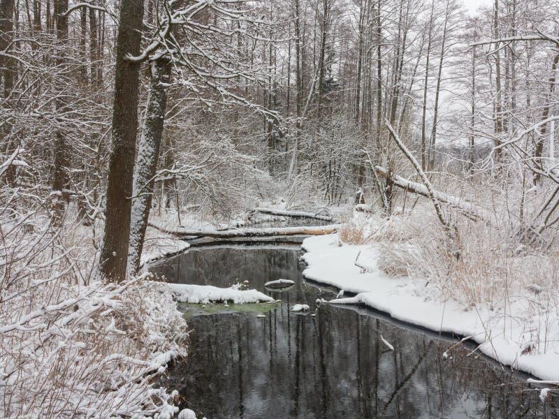 冬天多云天和森林河 免版税库存照片