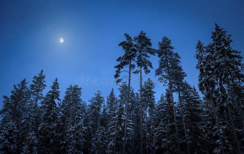 冬天夜在森林里 库存图片