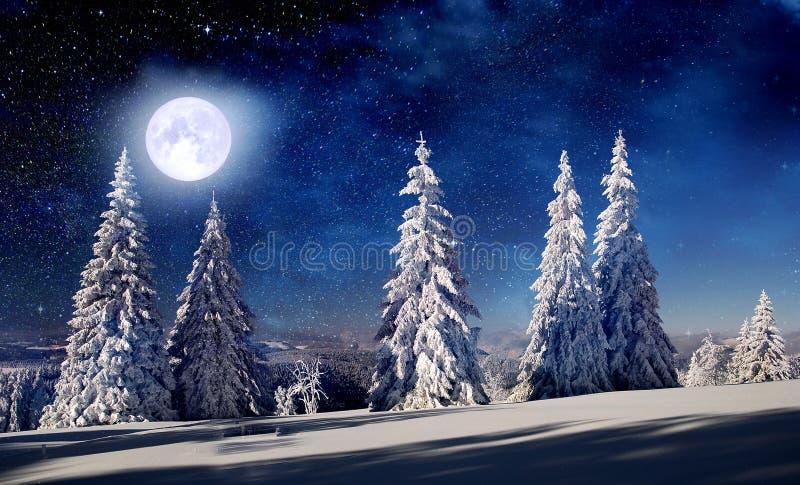 冬天夜森林和北极光 库存照片