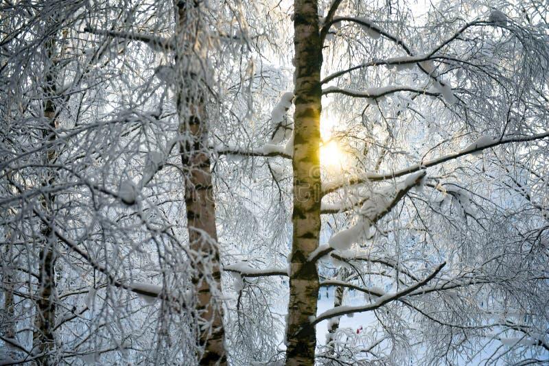 冬天太阳通过树偷看 免版税图库摄影