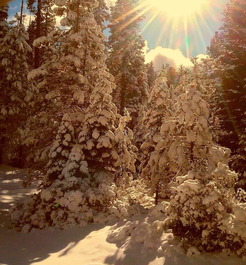 冬天太阳雪 库存照片