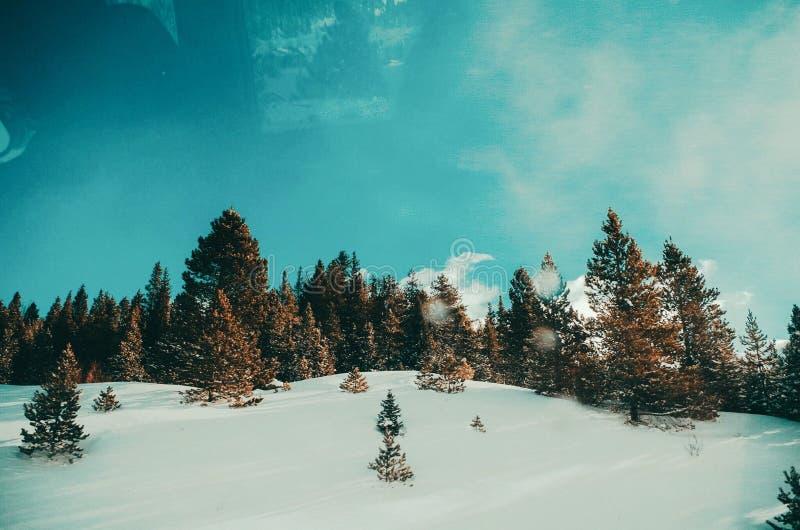 冬天奇迹 库存照片