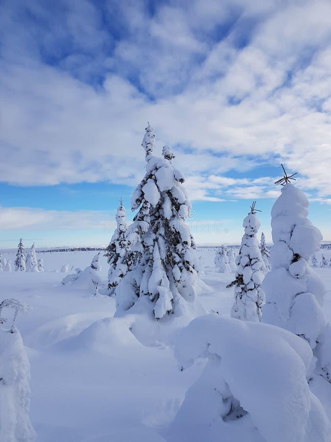 冬天妙境 与用雪盖的好的树的多云天空 免版税图库摄影
