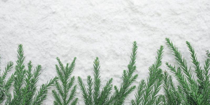 冬天季节、圣诞节概念想法与杉树和雪 免版税库存图片