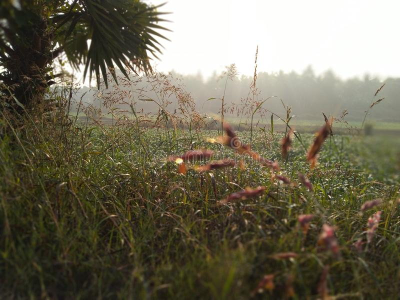冬天季节雪清除的plant& x27;在日出期间的s 库存图片