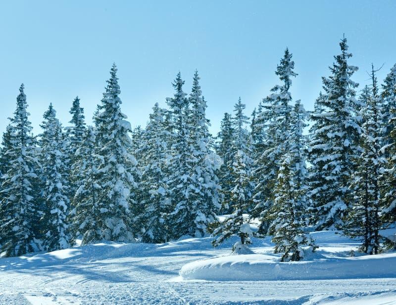 冬天山冷杉森林风景和降雪 免版税图库摄影