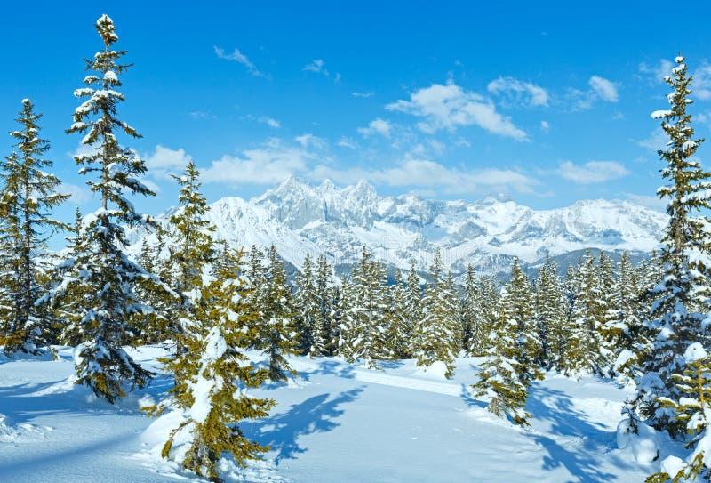 冬天山冷杉森林风景(奥地利)) 免版税库存图片