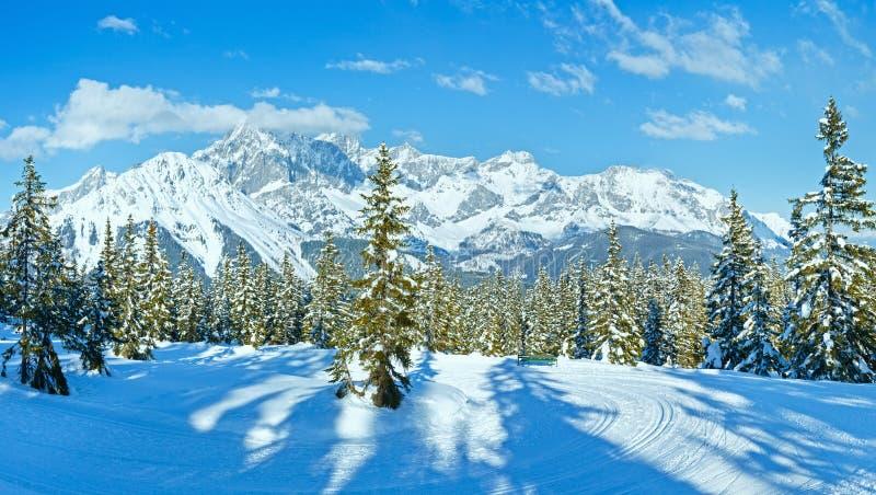 冬天山冷杉森林风景(奥地利)) 免版税库存照片