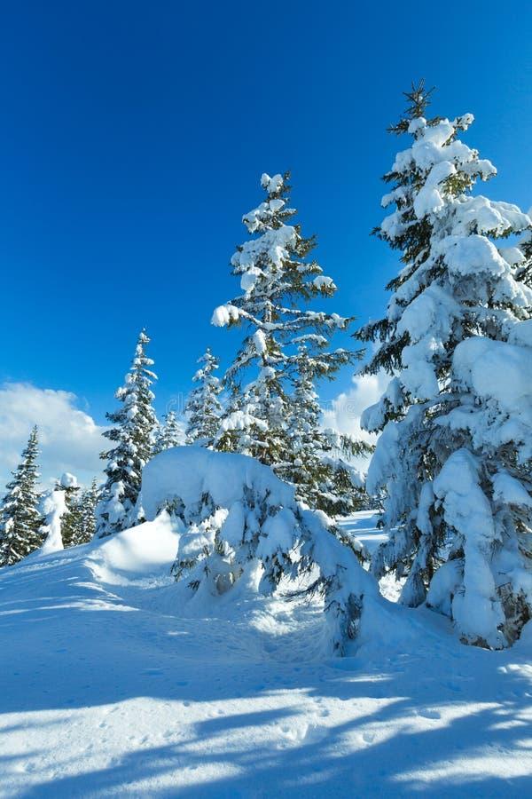 冬天山冷杉森林风景 免版税库存照片