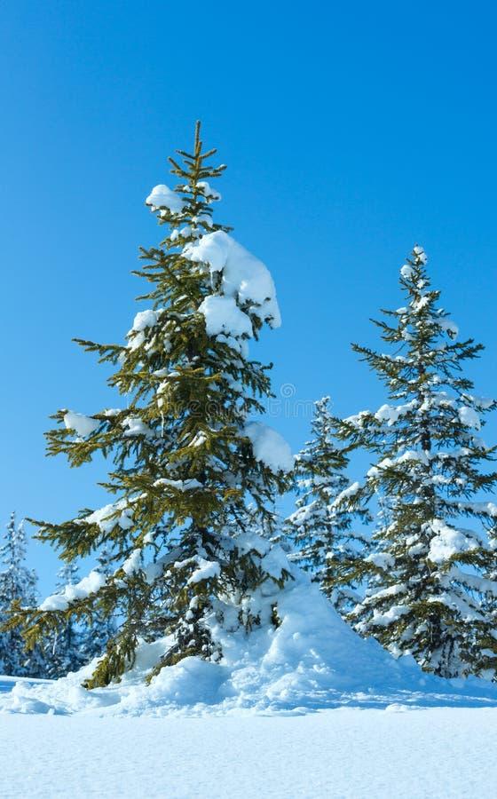 冬天山冷杉森林风景 图库摄影