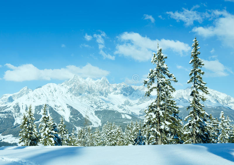 冬天山冷杉森林风景 库存图片