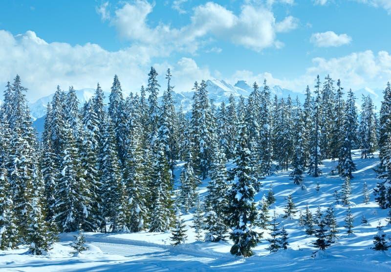 冬天山冷杉森林风景 免版税库存图片