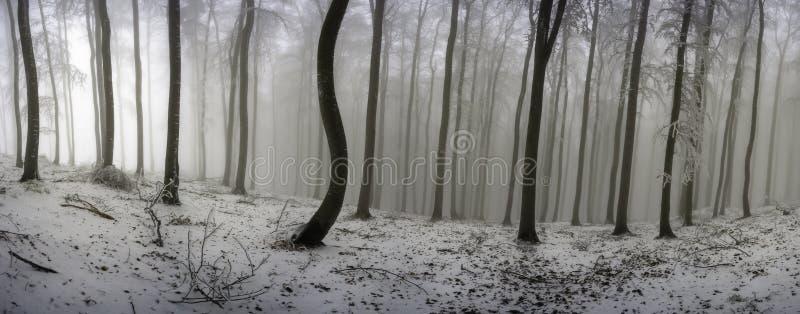 冬天山毛榉森林 免版税库存图片