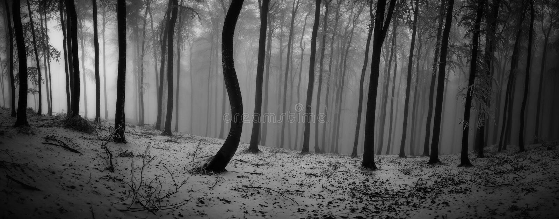 冬天山毛榉森林 库存照片