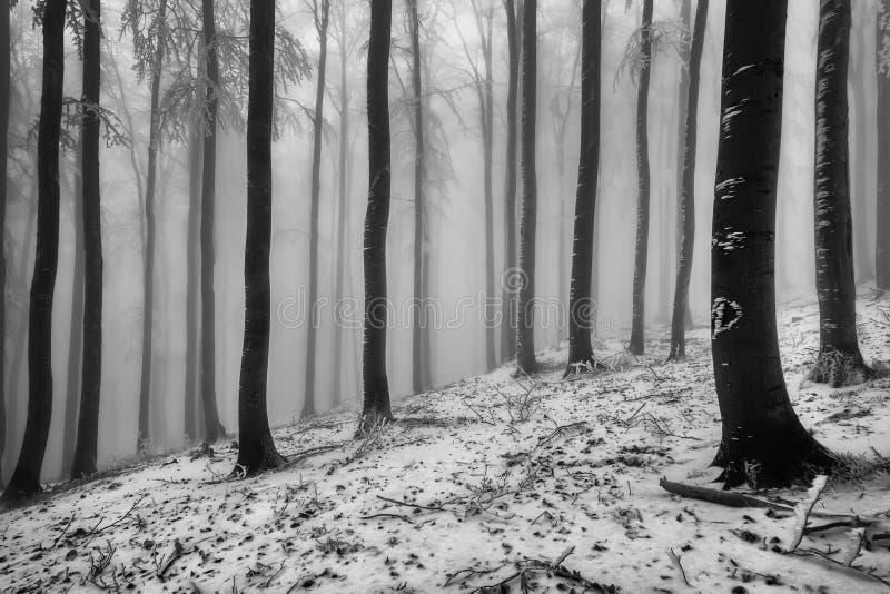 冬天山毛榉森林 图库摄影