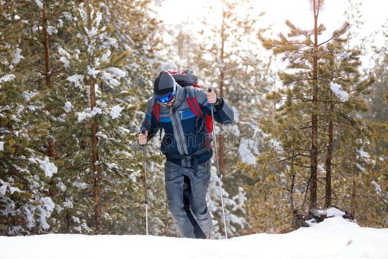 冬天山的远足者 有迁徙在森林里的背包的人 免版税图库摄影