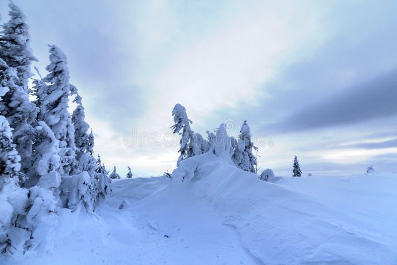 冬天山蓝色风景 在深雪的小云杉的树在明亮的多云天空拷贝空间背景 免版税库存图片