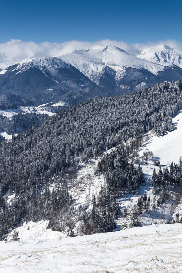 冬天山风景与很多雪的晴天 美丽如画和华美的冷漠的场面 库存图片