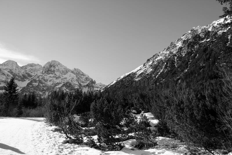 冬天山黑白全景  Tatra波兰 库存图片