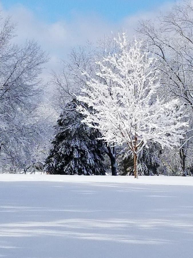 冬天床 库存照片
