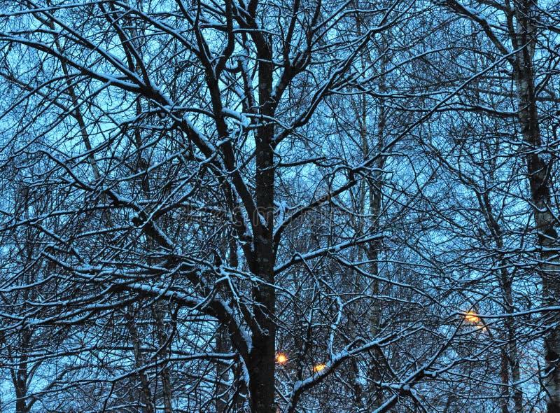 冬天微明 库存照片